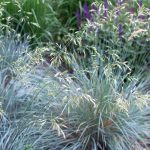 Gardening with Native Grasses