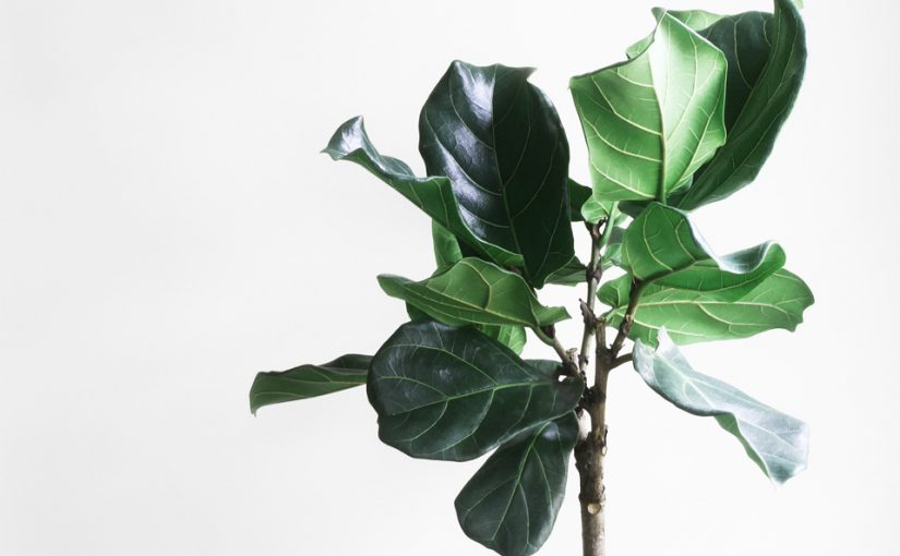 The Top 5 Trendiest Houseplants