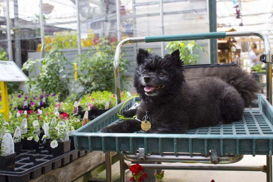 Happy Dog at Salisbury Greenhouse