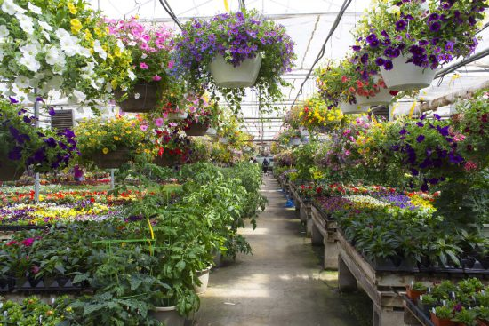 Salisbury Greenhouse - Sherwood Park and Edmonton