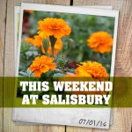 This Weekend at Salisbury | 07.01.2016