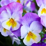 3 Reasons to Trim Back your Annuals