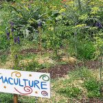 Permaculture 101