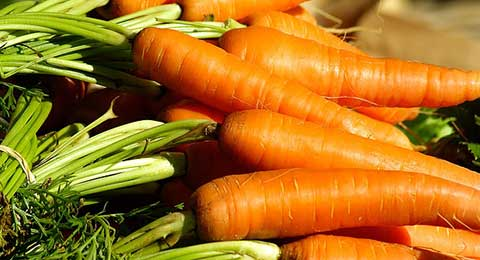 Gardening - Carrots Picture