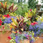 Container Garden University: Basic Elements