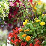 Container Garden University: Compatibility