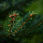 The Hidden Benefits of Evergreens