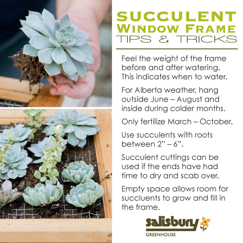 Succulent Window Frame How To - Salisbury Greenhouse