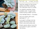 Succulent Window Frame Tips