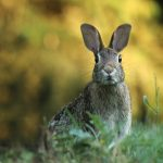 How To Keep Rabbits Out of the Garden