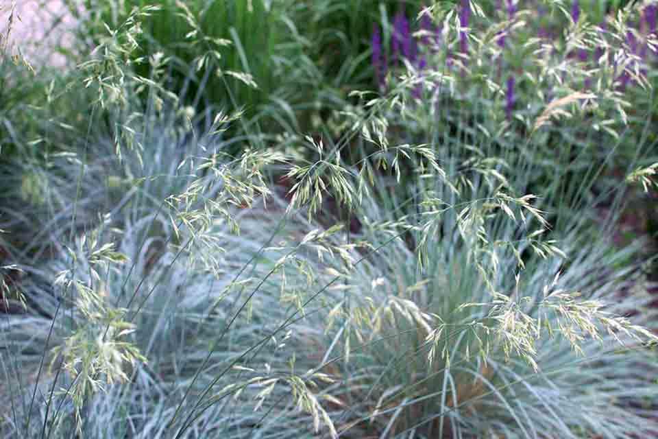 Low-Maintenance Planting - Salisbury Greenhouse