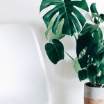 Unique Houseplants