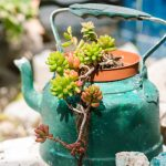 Grow Greener This Year: 5 Recycled Garden Projects You'll Love