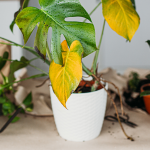 7 Proven Techniques For Debugging Your Houseplants