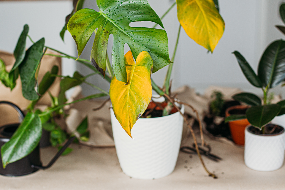 7 Proven Techniques for Debugging Your Houseplants feature