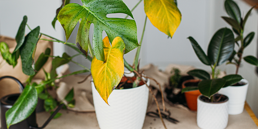 7 Proven Techniques for Debugging Your Houseplants main