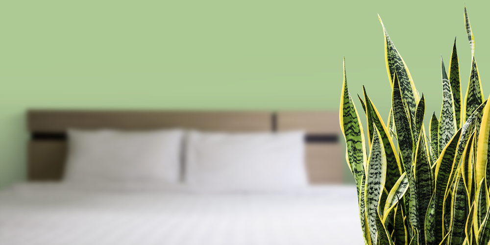 a minimalists guide to houseplants bedroom snake plant