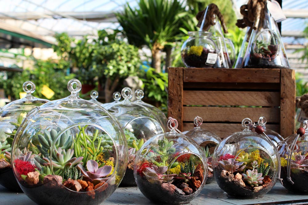 Arizonaeast Terrariums Salisbury Greenhouse