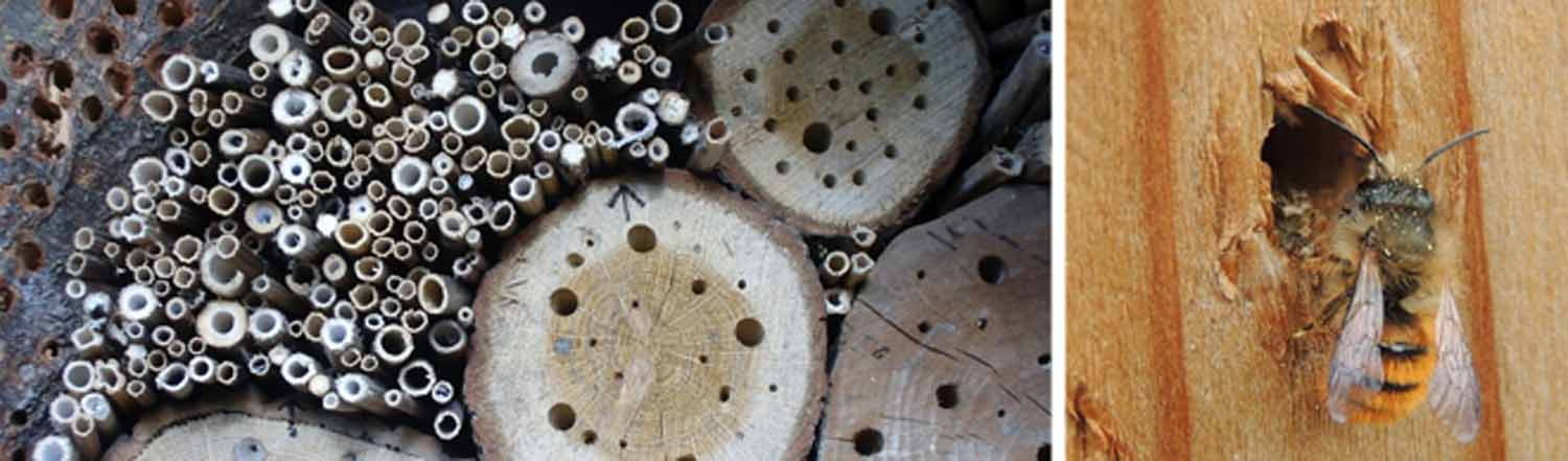 Building a Bee Hotel