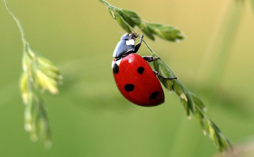 Bug Friendly Gardening