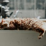 Cats and Houseplants: What You Need to Know