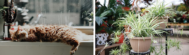 Cats And Houseplants What You Need To Know Salisbury Greenhouse
