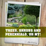 Trees, Shrubs, and Perennials, Oh My!