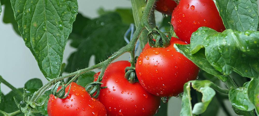 Edible Garden Layouts 101