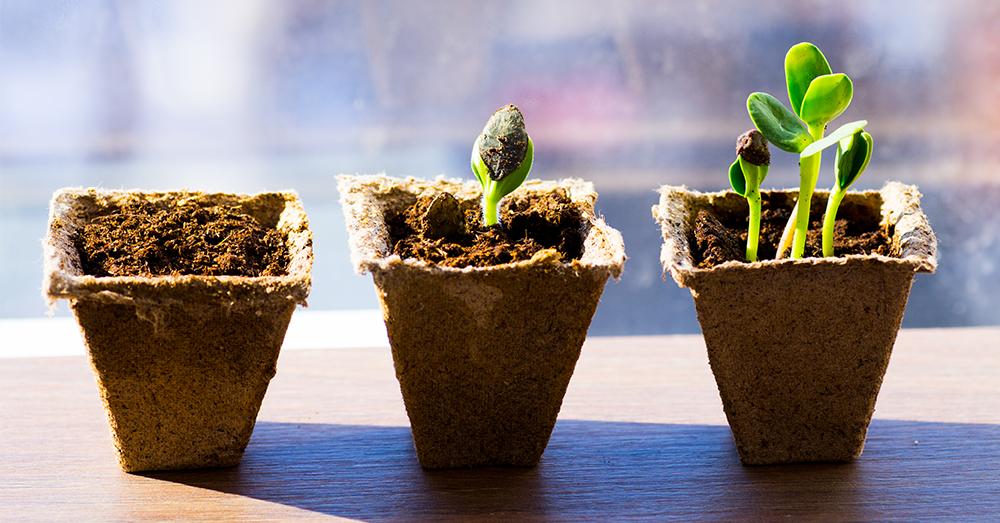 Edible Gardening with Kids Seed Starting