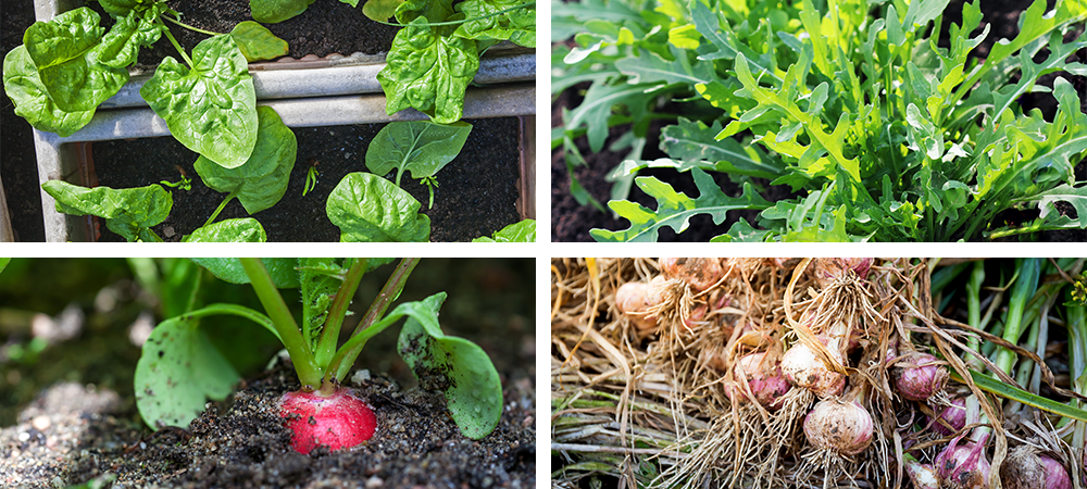 fall planting guide fall vegetables