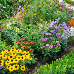 Flower Power Gardening