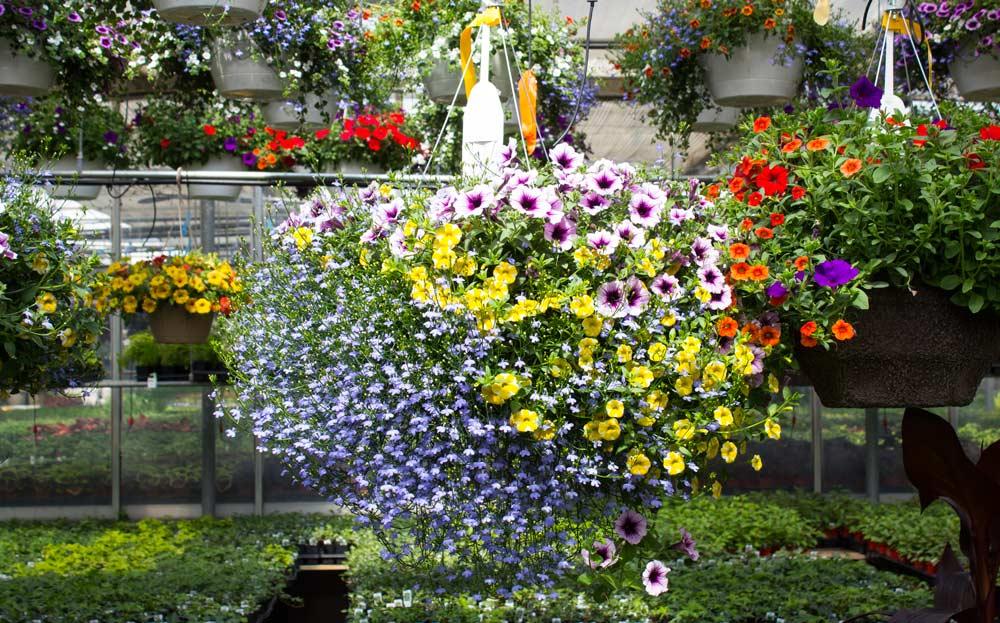d3f34dd78d1a Let s Get Planting - Salisbury Greenhouse
