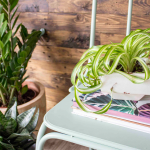 Holiday Proofing Your Houseplants