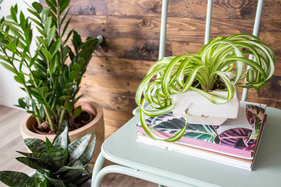 holiday proofing your houseplants feature