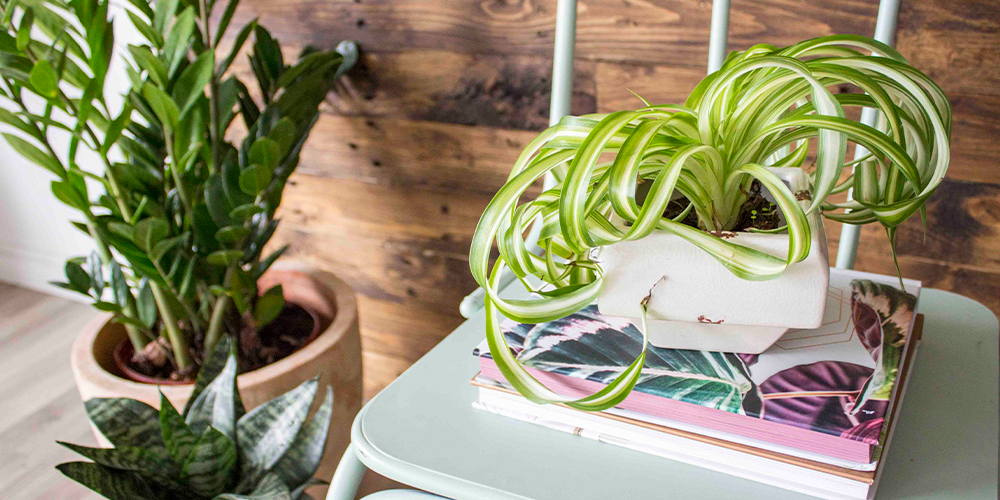 holiday proofing your houseplants main