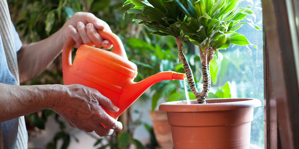 holiday proofing your houseplants watering