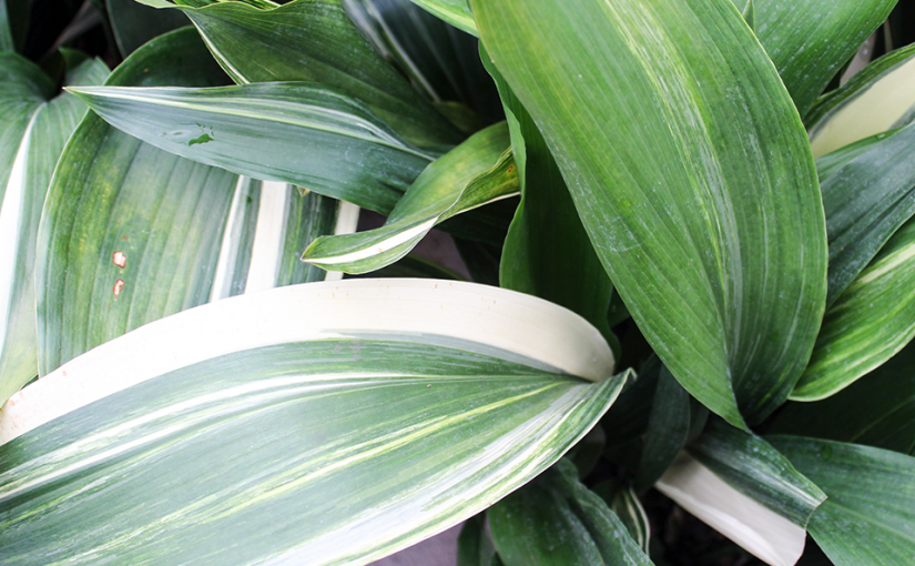 Have-to-Have Houseplants for 2019