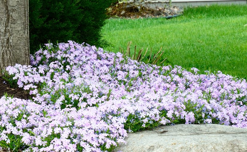 Hot New Plants for the Landscape