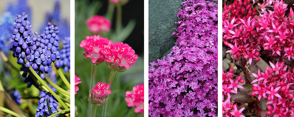 Hot New Plants for the Landscape Ground Cover Plants