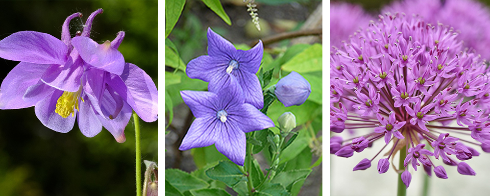 Hot New Plants for the Landscape Out of the Ordinary
