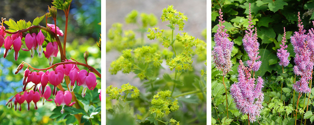 Hot New Plants for the Landscape Shade Plants
