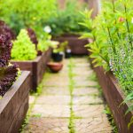 Kicking It Old School: How To Grow A Victory Garden