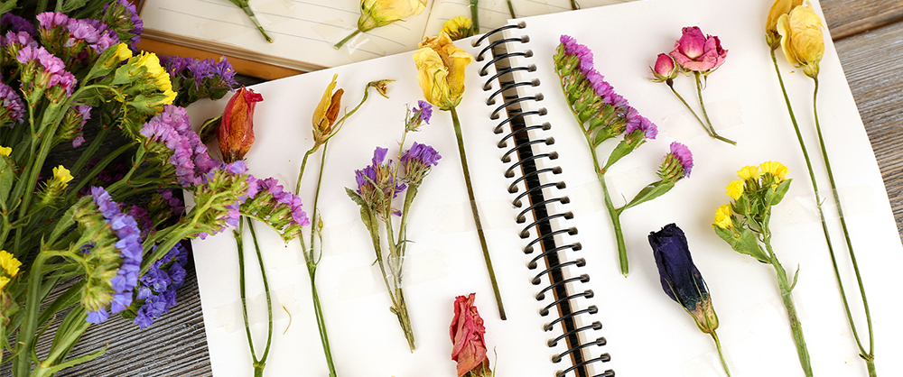 how to create a personalized plant journal slider