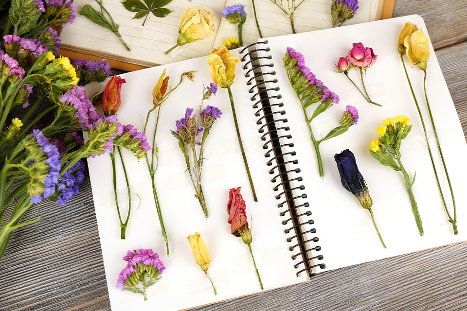 how to create a personalized plant journal feature