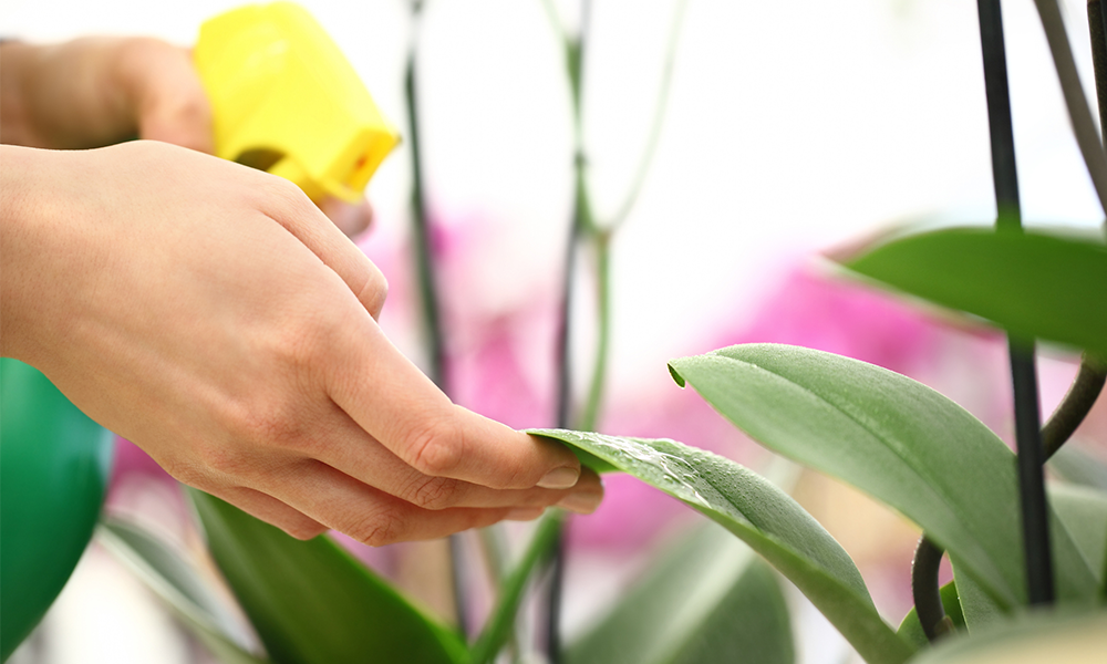 Caring for Houseplant