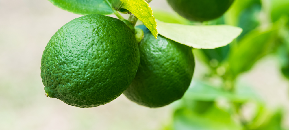 Key Lime is also known as Limequat