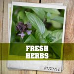 Herbs for the Kitchen