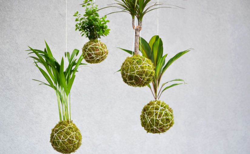 The Art of Kokedama