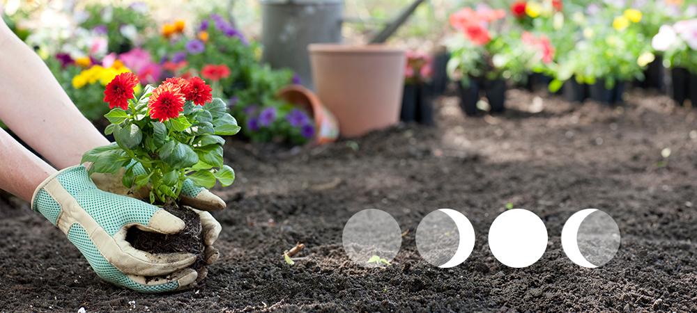 Moon Phase Gardening - Salisbury Greenhouse