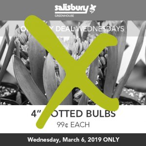 99 cent bulbs sale finished